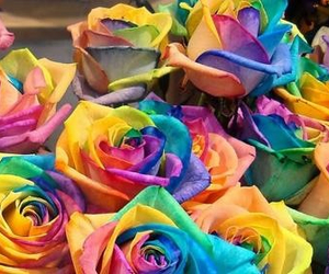 amazing, flowers, and colourful roses image
