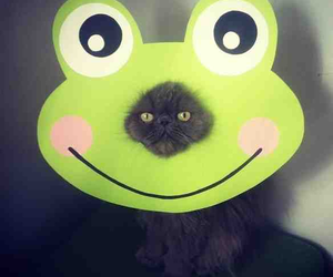 cat, funny, and frog image