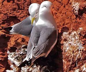birds, feelings, and hearts image