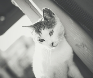 animal, blackandwhite, and bw image