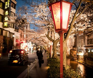 japan, street, and flowers image
