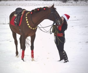 christmas, horse, and new year image