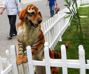dog and tiger image