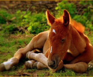 horse, animal, and cute image