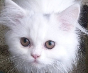 cat, pretty, and sweet image