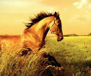 horse, animal, and field image