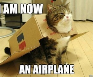 cat, funny, and airplane image