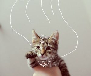 cat, cute, and superman image