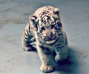 adorable, love, and tiger image