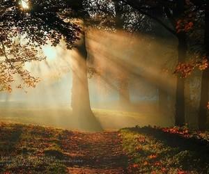 beautiful, nature, and landscape image