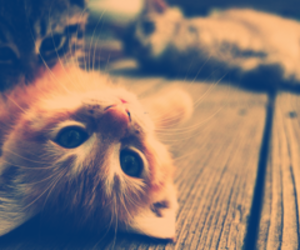 <3, cat, and love image