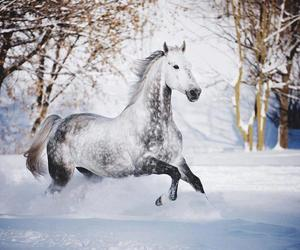 horse, winter, and white horse image