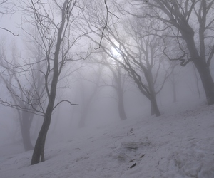 pale, snow, and tree image