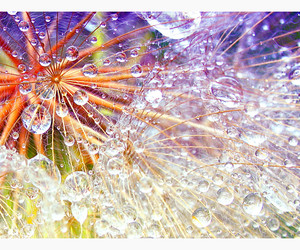 colorful, micro, and dandelion image