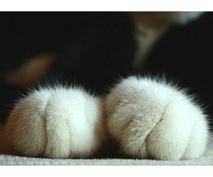 little paws warm image