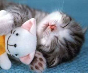 cat, lovely, and omgsocute image