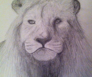 black and white, drawing, and lion image