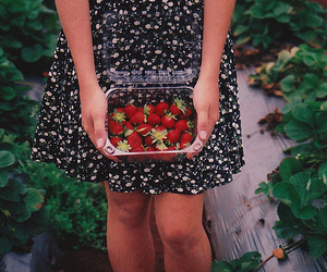 strawberry, vintage, and photography image