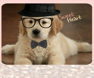 puppy, swag, and golden retriever image