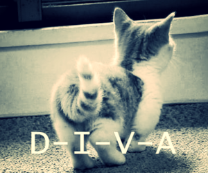 diva, cat, and sweet image
