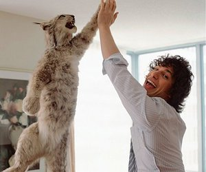 andy samberg, funny, and cat image