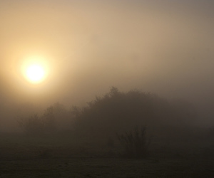 autumn, mist, and dawn image