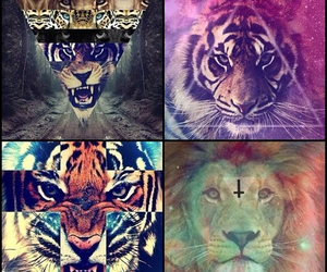 lion and tiger image