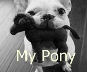 dog, pony, and cute image