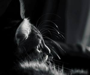 black and white, photography, and cute image