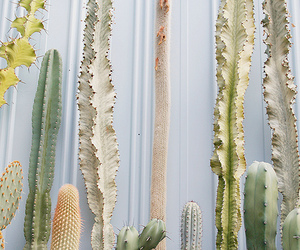 cactus, nature, and decor image