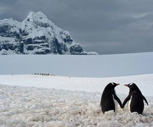 penguin, love, and snow image