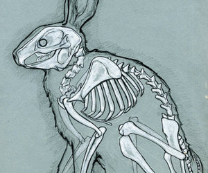 rabbit, bunny, and skeleton image
