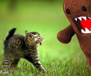 cat and domo image