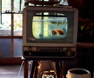 fish, tv, and vintage image