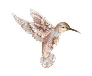 bird, hummingbird, and drawing image