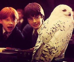 harry potter, ron weasley, and hedwig image