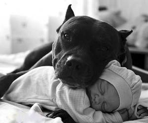 baby, dog, and pet image