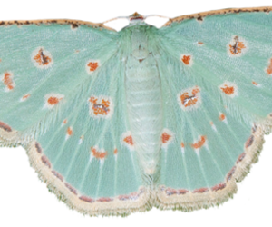 butterfly and moth image