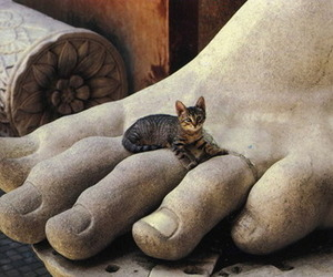 cat, feet, and kitty image