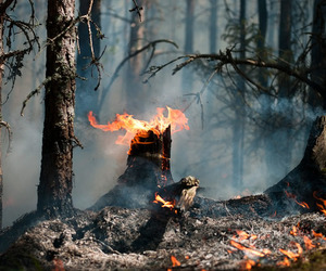 fire, forest, and tree trunk image