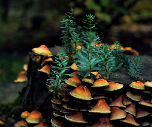 nature, forest, and mushroom image