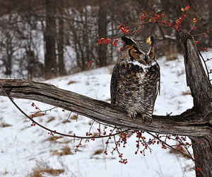 nature, owl, and snow image