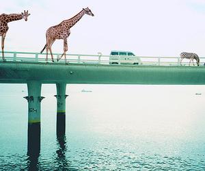 giraffe, animal, and bridge image