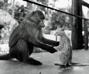 cat and monkey image
