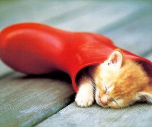 cat, kitten, and red image