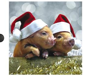 christmas, cute animals, and piglets image