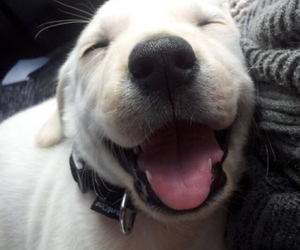 dog, smile, and cute image