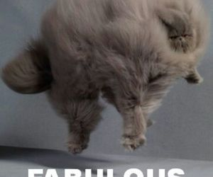 cat, fabulous, and funny image