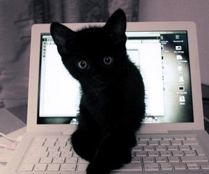 adorable, attention, and computer image