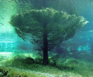 tree, water, and nature image